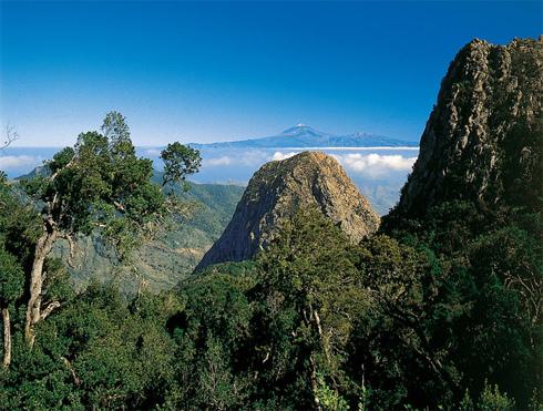 Parque Nacional de Garajonay La Gomera