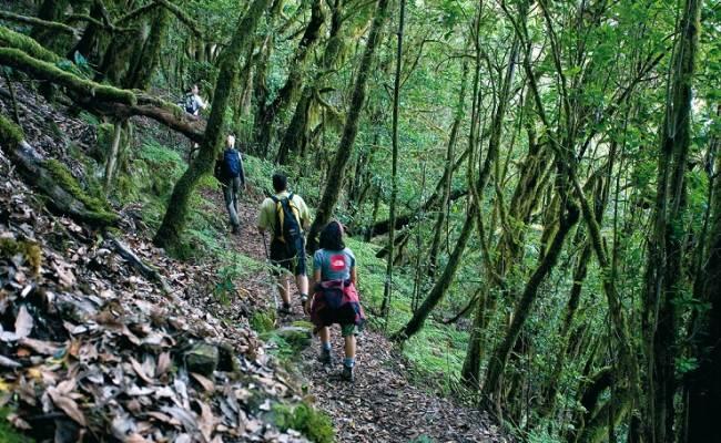 santa-cruz-de-tenerife-hermigua-ruta-del-cedro-48-7